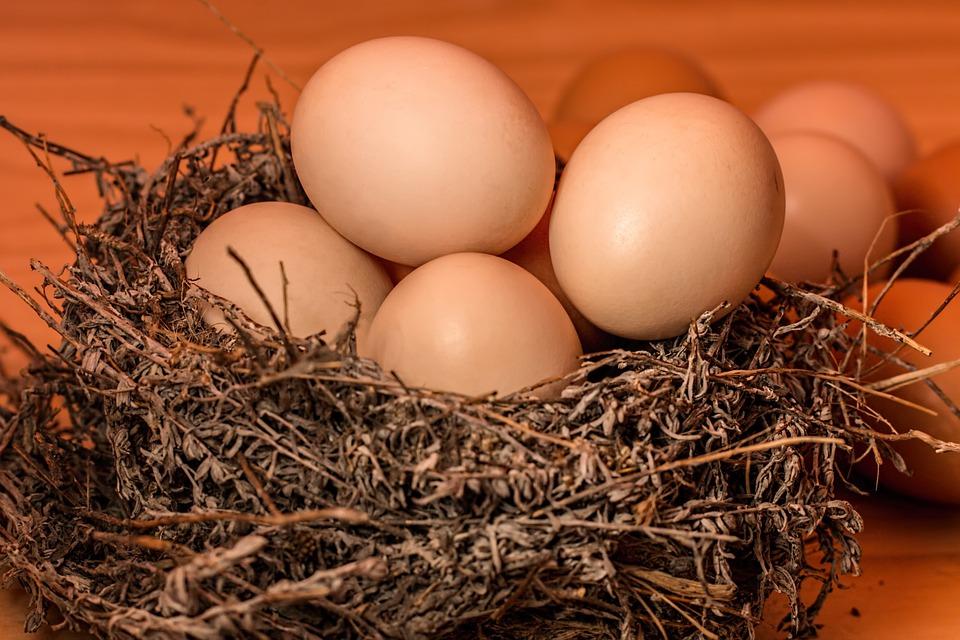 ovos pixabay